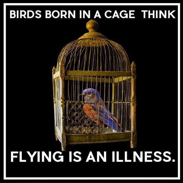 birdcaged.jpg