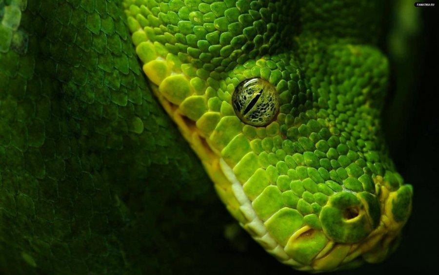 snake_python_animal_wallpaper_high_resolution.jpg.176127ede3eb51235e9fe17e8d4c2da1.jpg