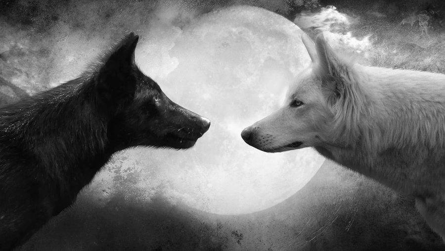 Wolf-and-Moon-Cool-HD-Wallpapers.jpg.318ad2bd8905104b43d8ea884ce46ee5.jpg