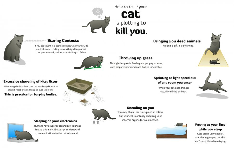 how-to-tell-if-your-cat-is-plotting-to-kill-you.jpg