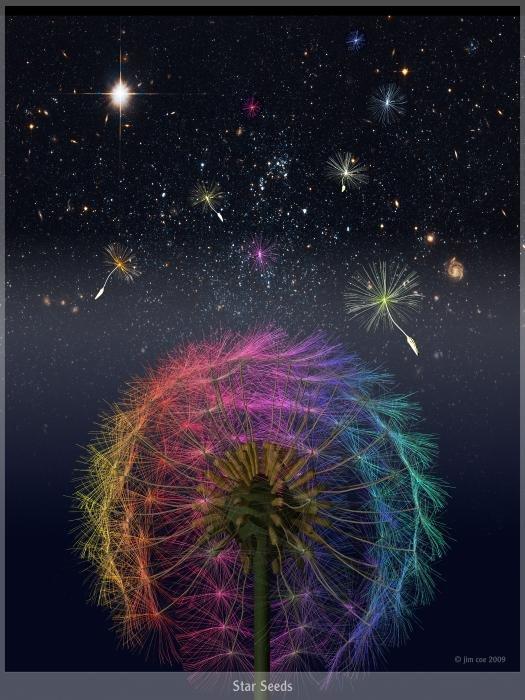 star-seeds.jpg.a663b40b6101d5cea9a281629b412267.jpg