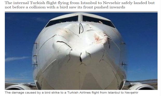 turkish-airliner-nose.png