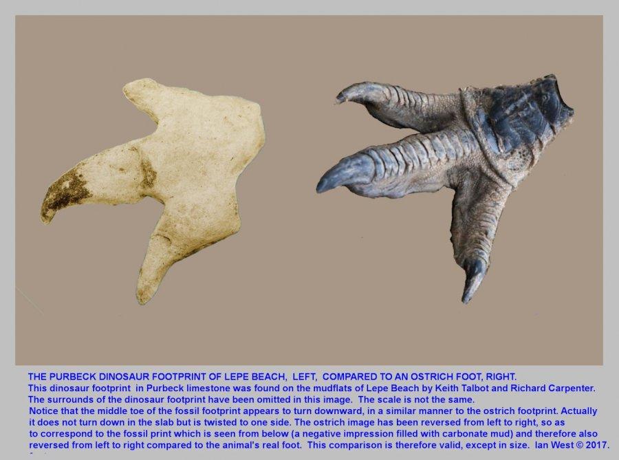 17LPD-Dinosaur-Ostrich-Footprints-fin-m.jpg
