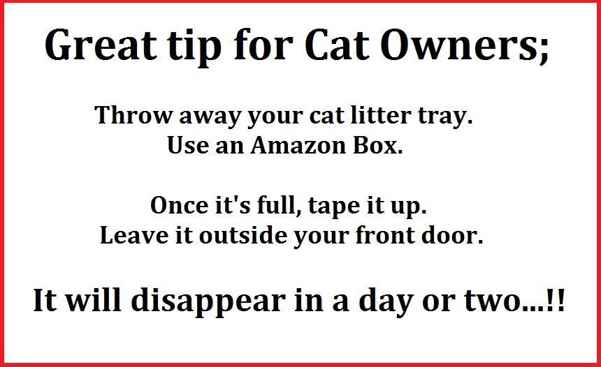 cat tray.jpg