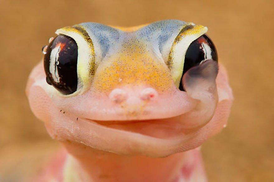 cute-reptiles-107__605.jpg