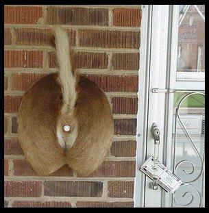 doorbell001.jpg