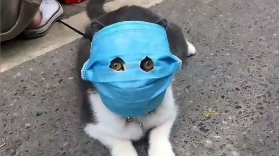 Animals-Face-Mask-ASIAWIRE-4.jpg