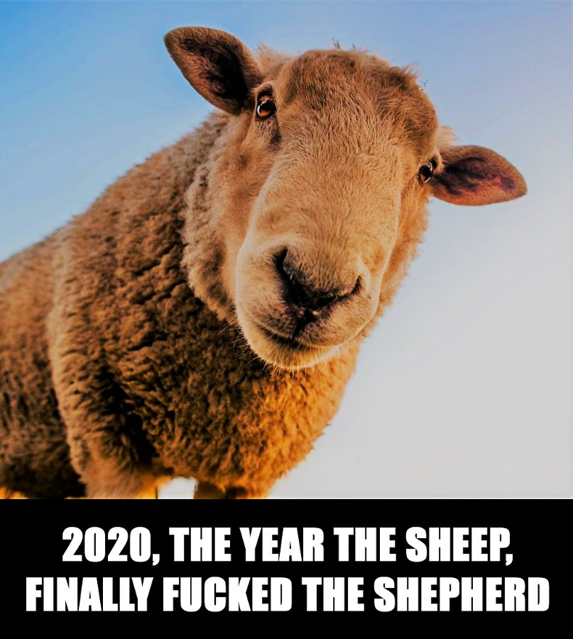 sheep-meme.jpg