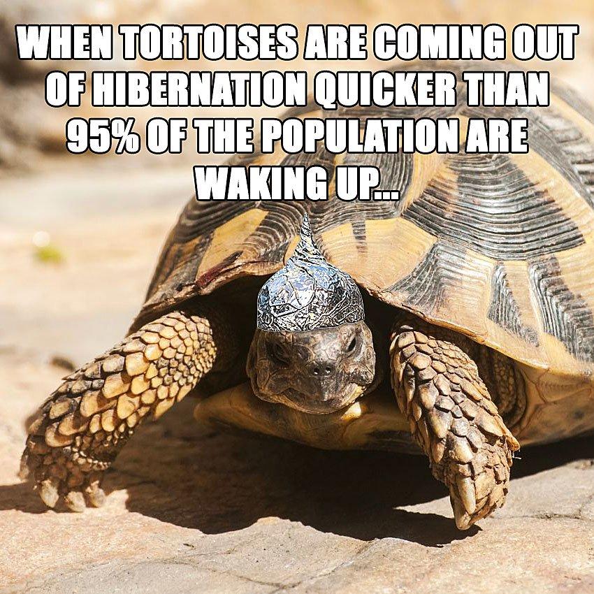 tortoise-hibernation.jpg