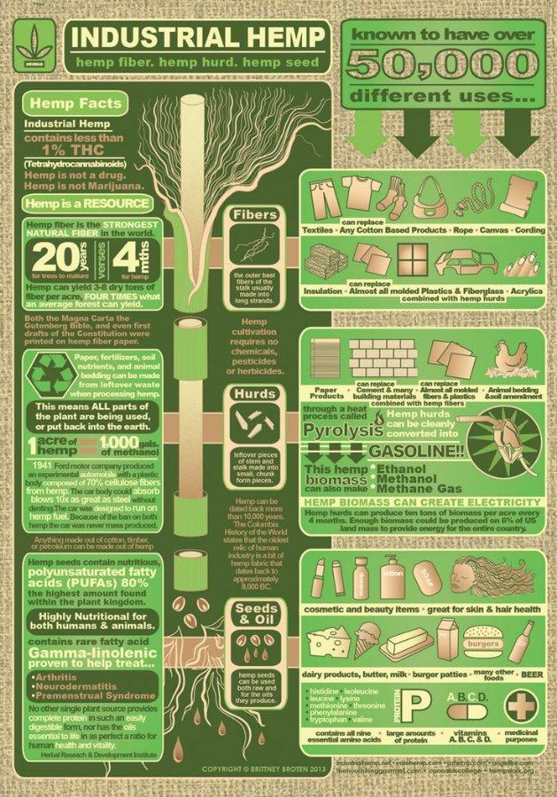 Hemp-Infographic-min.jpg.409cf98ae81d941ba1800b9801ea91d8.jpg