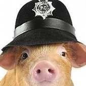 police-pig.jpg.41fbda29b2f77b18245f4c22945e9680.jpg
