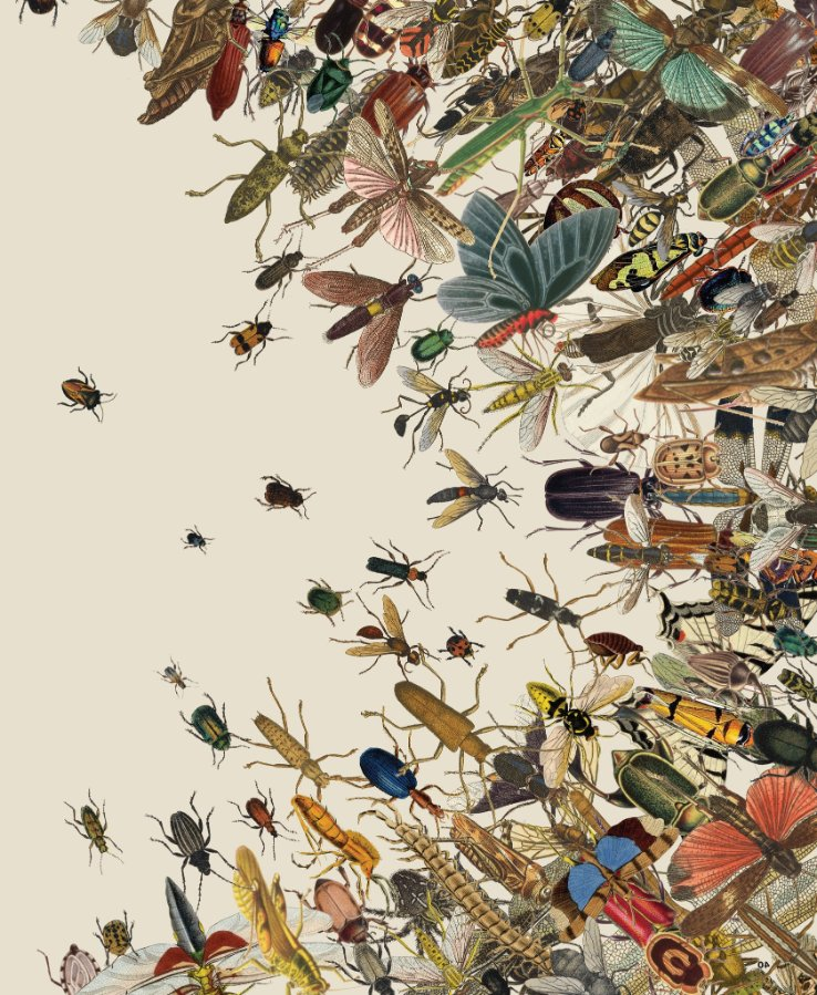 insects-image1-superJumbo-v3.jpg