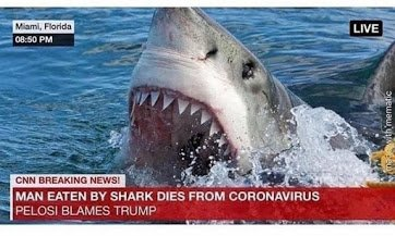 corona test shark.jpg