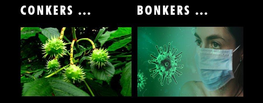 conkers_bonkers.jpg.08a569aebe3f84a28be6ee38c012335a.jpg