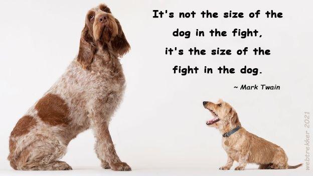 fight_dog.jpg.dd97431a9caabed52e194625b9ea486e.jpg