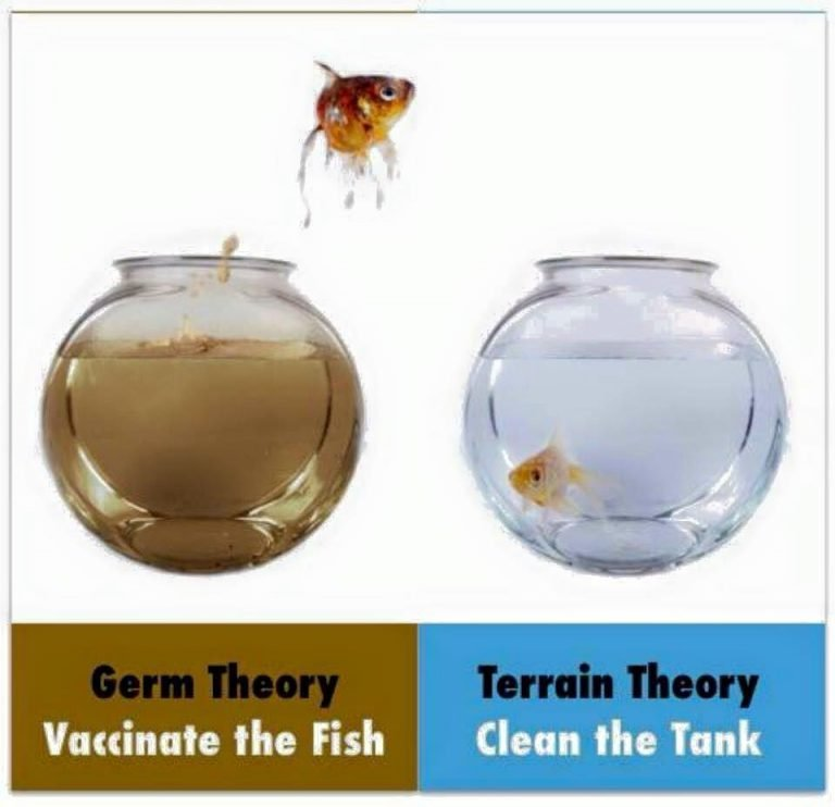 germ-theory-and-terrain-theory-pasteur-768x742.jpg